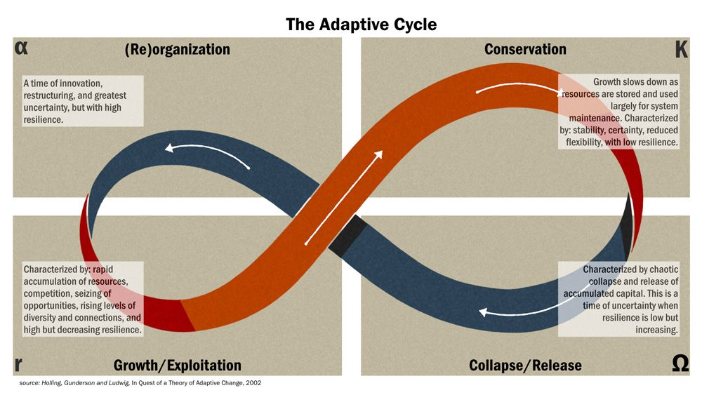 Holling et al Whale diagram of the ecosystem adaptive cycle.